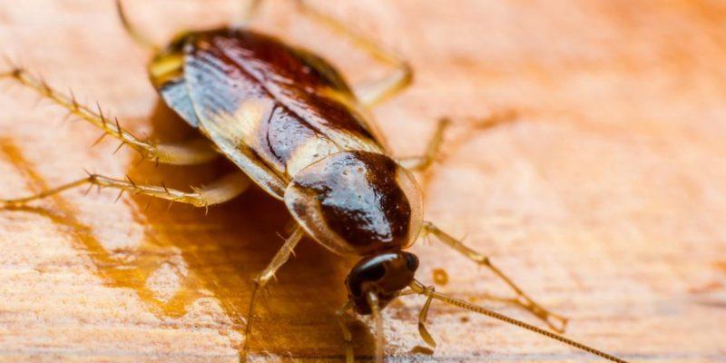 борбата с хлебарките