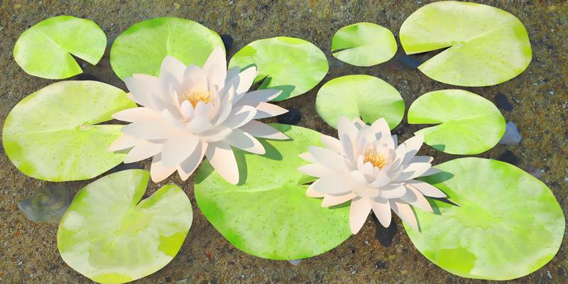 Зелена лилия