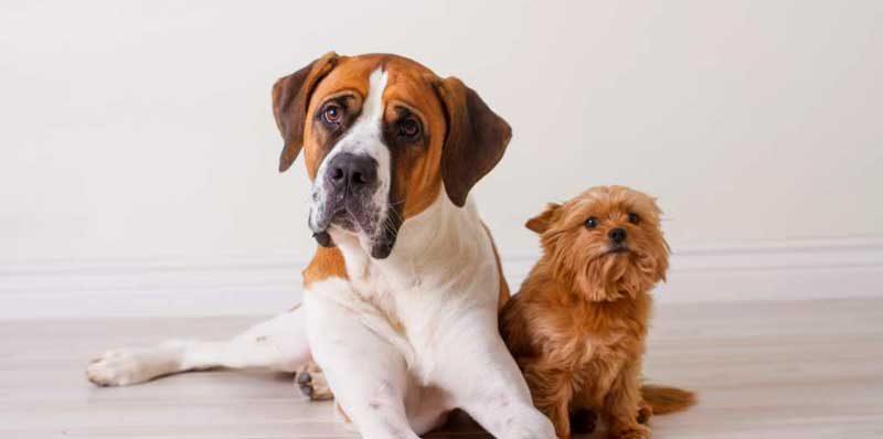 Как да дадем хапче на куче