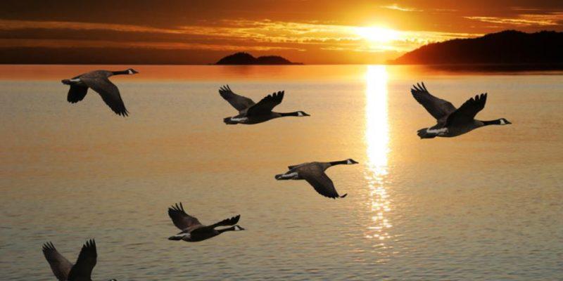 Градските птици - радост за окото или опасност