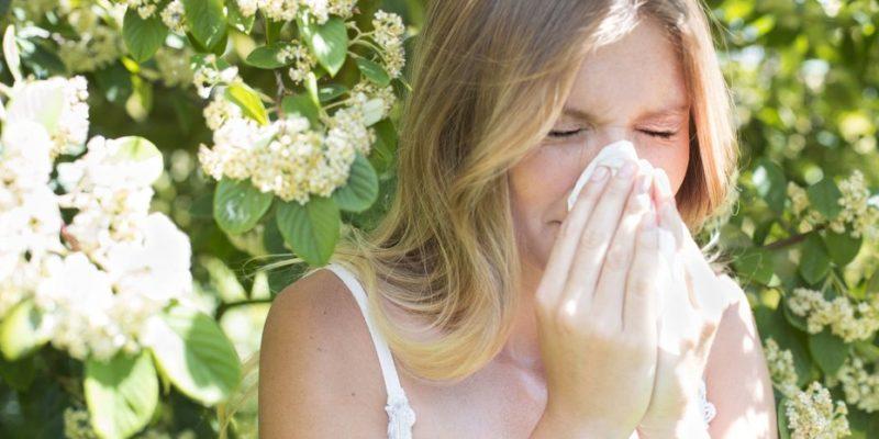Топдом - алергии, растения, домашни