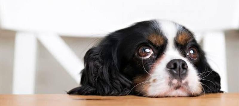 Сладко кученце вкъщи