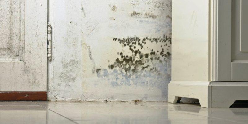 Миризма на мухъл - как да я елиминираме